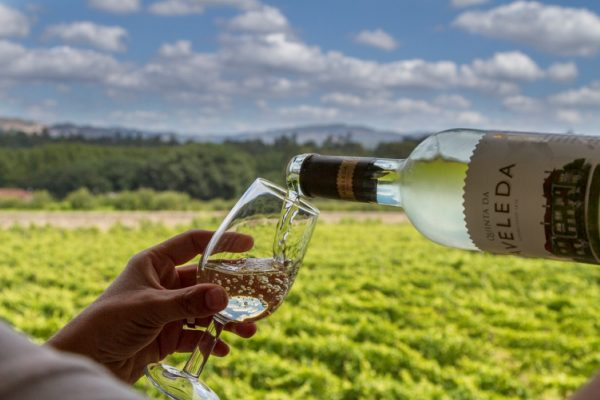 Portugeese Wines You Need to Try