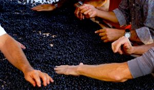 how is wine made step by step