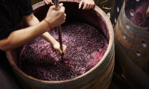 how to ferment grapes