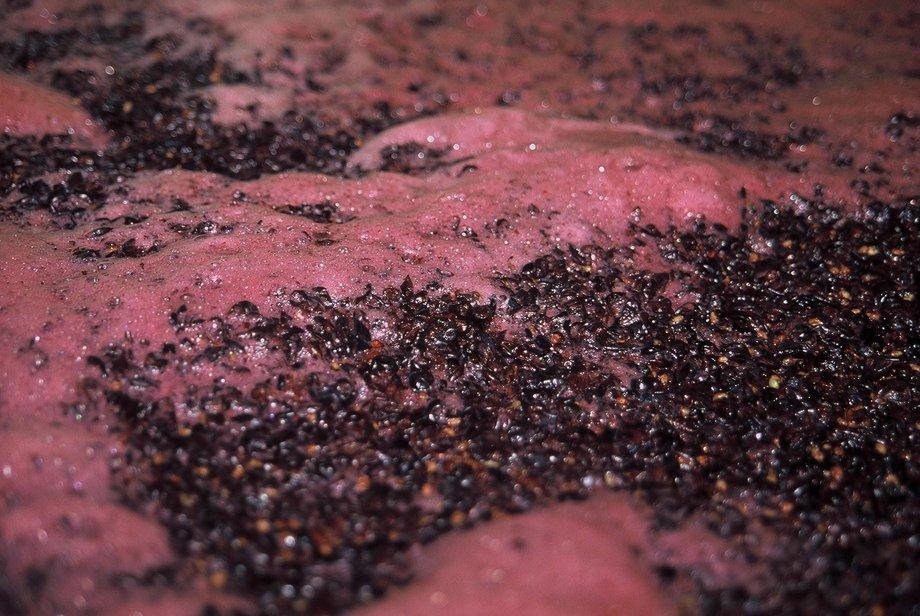 yeasts in fermentation